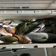 9月17日(月) 午後便・ウタセ真鯛の写真その1