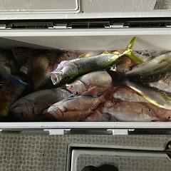 9月17日(月) 午後便・ウタセ真鯛の写真その2