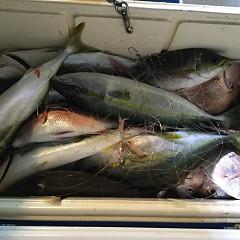 9月17日(月) 午後便・ウタセ真鯛の写真その4
