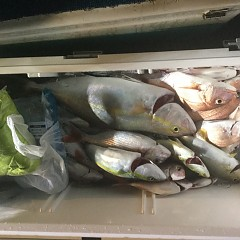9月 18日(火) 午後便・ウタセ真鯛の写真その6