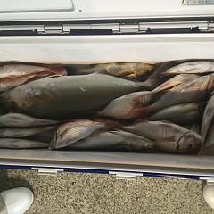 9月 19日(水) 午後便・ウタセ真鯛の写真その3