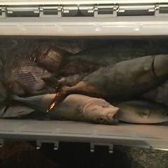 9月 22日(土) 午後便・ウタセ真鯛の写真その7