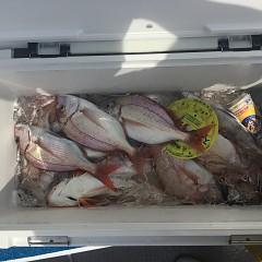 9月 23日(日) 午前便・ウタセ真鯛の写真その7