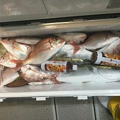 9月 23日(日) 午後便・ウタセ真鯛の写真その7