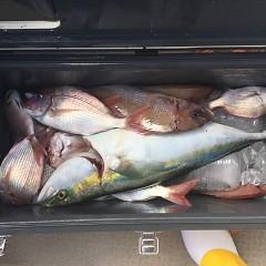 9月 24日(月) 午前便・ウタセ真鯛の写真その5