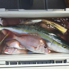 9月 24日(月) 午前便・ウタセ真鯛の写真その6