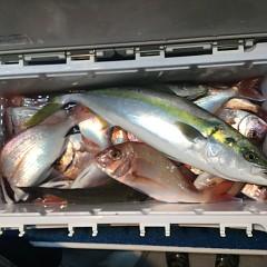 9月 24日(月) 午後便・ウタセ真鯛の写真その5