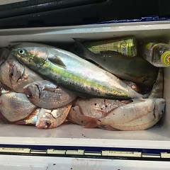 9月 24日(月) 午後便・ウタセ真鯛の写真その6