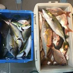 10月 2日(火) 午後便・ウタセ真鯛の写真その7