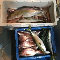 10月 2日(火) 午後便・ウタセ真鯛の写真その8