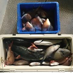 10月 2日(火) 午後便・ウタセ真鯛の写真その10