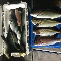 10月 7日(日) 午後便・ウタセ真鯛の写真その7