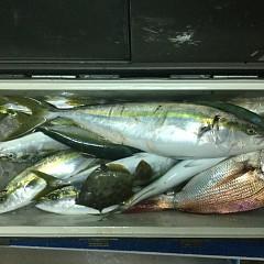 10月 7日(日) 午後便・ウタセ真鯛の写真その11