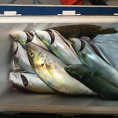 10月 7日(日) 午後便・ウタセ真鯛の写真その12