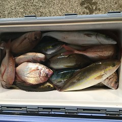 10月 8日(月) 午後便・ウタセ真鯛の写真その10