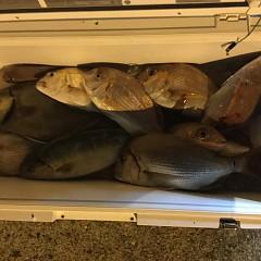 10月 8日(月) 午後便・ウタセ真鯛の写真その12