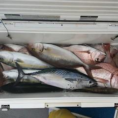 10月 10日(水) 午前便・ウタセ真鯛の写真その1