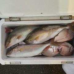 10月10日(水)午後便・ウタセマダイ釣りの写真その10