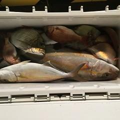 10月 11日(木) 午後便・ウタセ真鯛の写真その6