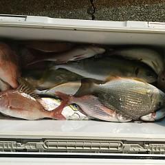 10月 11日(木) 午後便・ウタセ真鯛の写真その7
