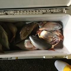 10月 11日(木) 午後便・ウタセ真鯛の写真その10