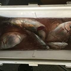 10月 12日(金)午後便・ウタセ真鯛の写真その1