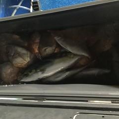 10月 12日(金)午後便・ウタセ真鯛の写真その3