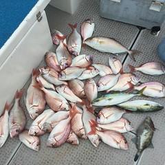 10月 15日(月) 午前便・ウタセ真鯛の写真その5