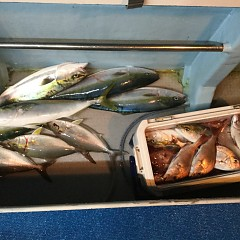 10月15日(月)午後便・ウタセマダイ釣りの写真その8