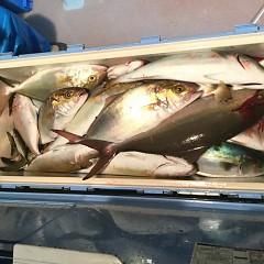 10月17日(水)午後便・ウタセ釣りの写真その1