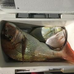 10月 20日(土) 午後便・ウタセ真鯛の写真その8