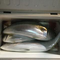 10月 20日(土) 午後便・ウタセ真鯛の写真その11