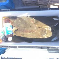 10月 21日(日) 午前便・ヒラメ釣りの写真その6