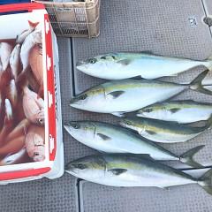 10月 21日(日) 午後便・ウタセ真鯛の写真その8
