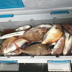 10月 21日(日) 午後便・ウタセ真鯛の写真その9