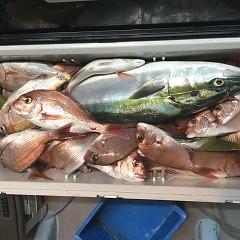 10月 21日(日) 午後便・ウタセ真鯛の写真その10