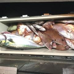 10月 21日(日) 午後便・ウタセ真鯛の写真その11