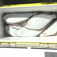 10月 22日(月) 午前便・ヒラメ釣りの写真その4