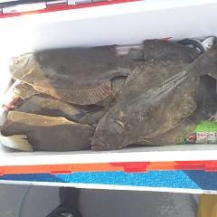 10月 22日(月) 午前便・ヒラメ釣りの写真その5