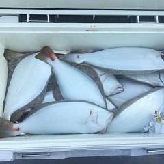 10月 29日(月) 午前便・ヒラメ釣りの写真その11
