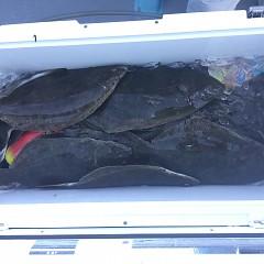 10月 30日(火) 午前便・ヒラメ釣りの写真その10
