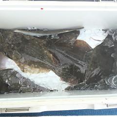 10月 31日(水) 午前便・ヒラメ釣りの写真その4