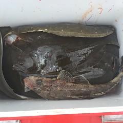 10月 31日(水) 午前便・ヒラメ釣りの写真その9