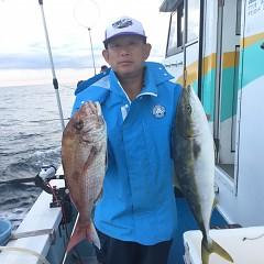 11月 7日(水) 午後便・ウタセ真鯛の写真その4