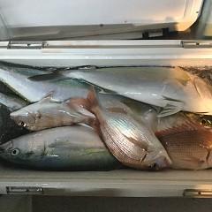 11月 7日(水) 午後便・ウタセ真鯛の写真その8