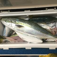 11月 7日(水) 午後便・ウタセ真鯛の写真その9