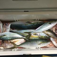 11月 7日(水) 午後便・ウタセ真鯛の写真その10