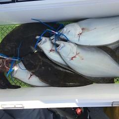 11月 8日(木) 午前便・ヒラメ釣りの写真その6