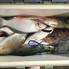 11月 8日(木) 午後便・ウタセ真鯛の写真その9