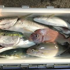 11月 8日(木) 午後便・ウタセ真鯛の写真その10